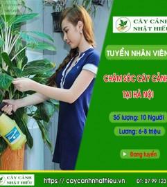 Tuyển Nhân Viên Chăm Sóc Cây Cảnh Văn Phòng Tại Hà Nội