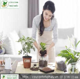 Cách trồng và chăm sóc cây cảnh để bàn đẹp đúng kỹ thuật và sống lâu