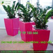 cho-thue-cay-canh-van-phong